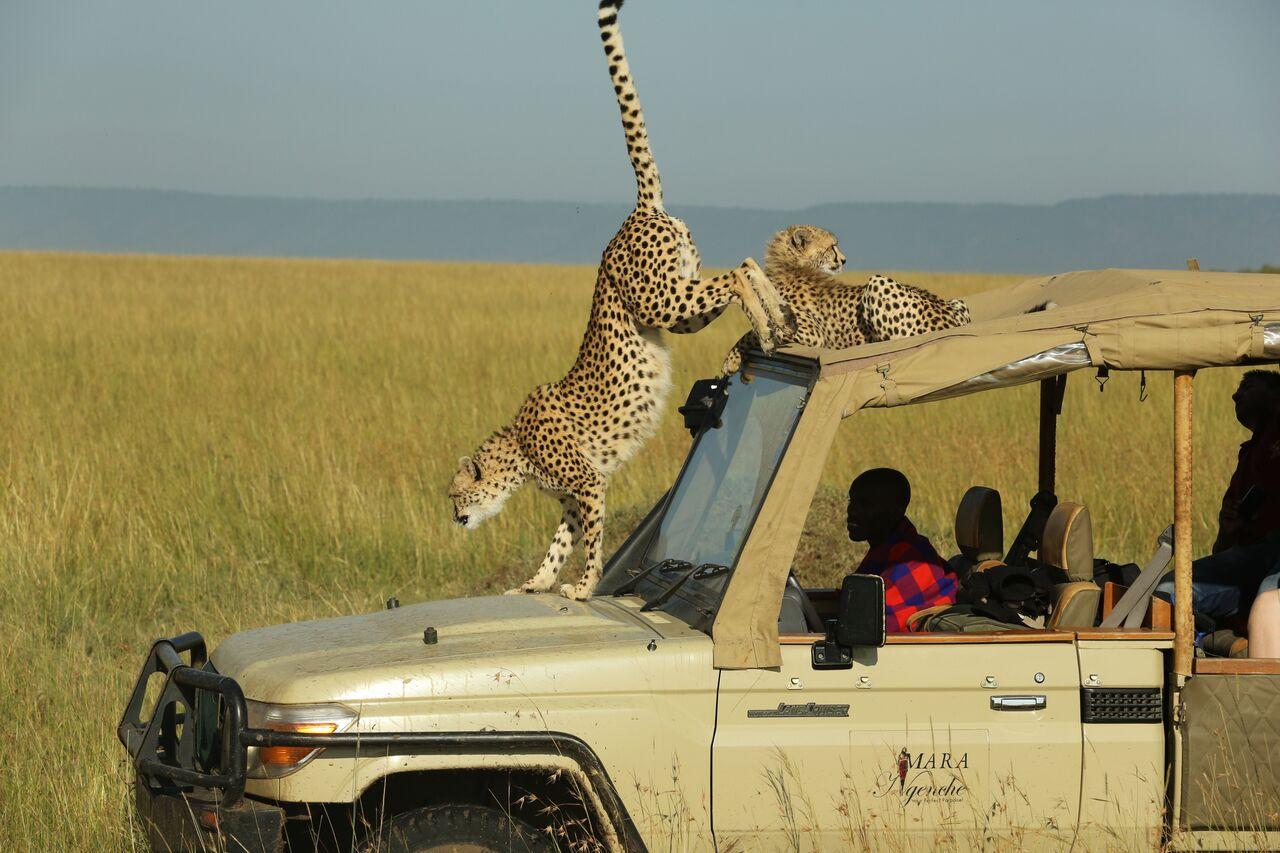 Day 3: Maasai Mara