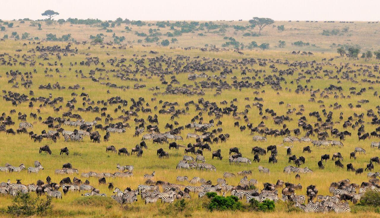 Day 4: Maasai Mara - Nairobi