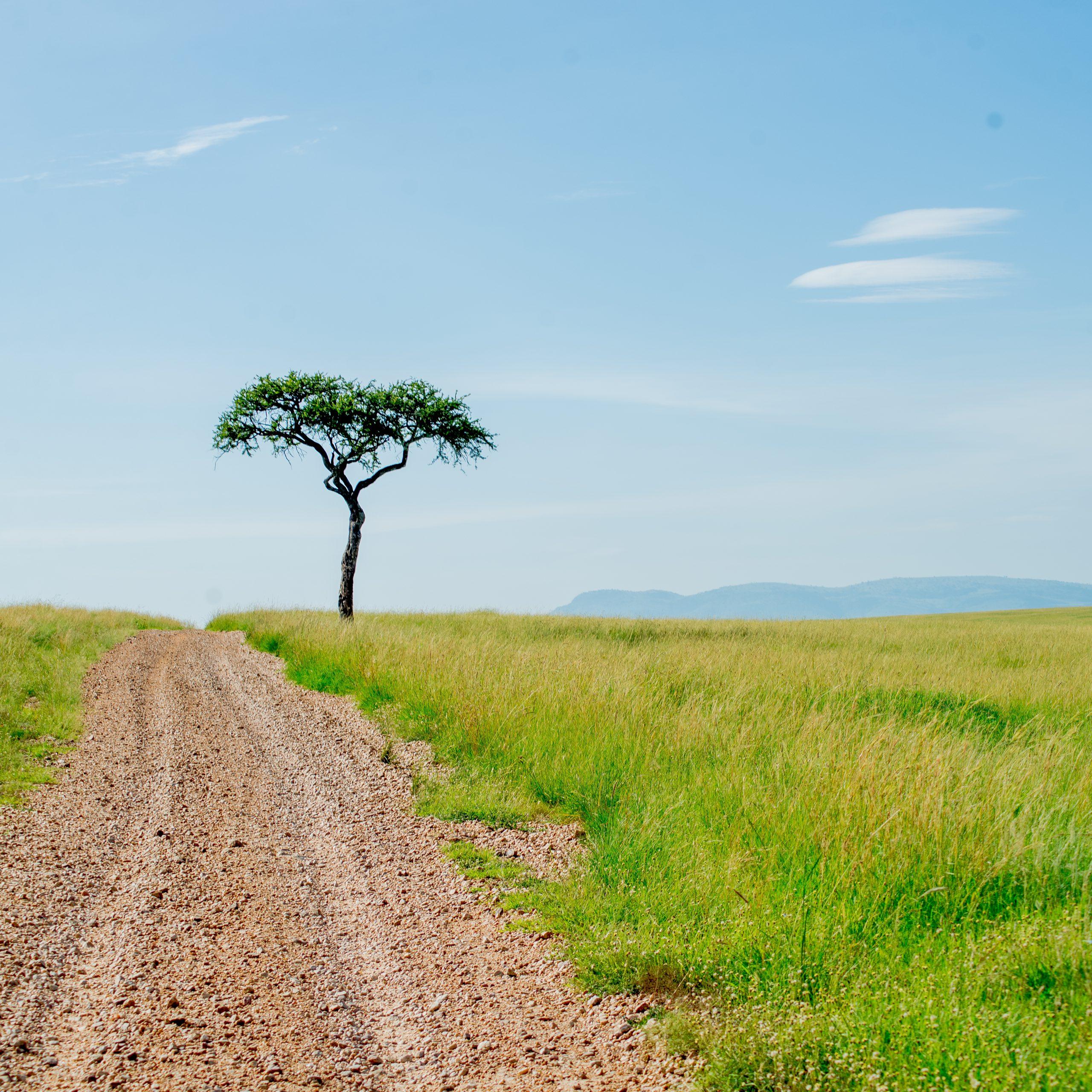 Day 3: Lake Naivasha - Maasai Mara