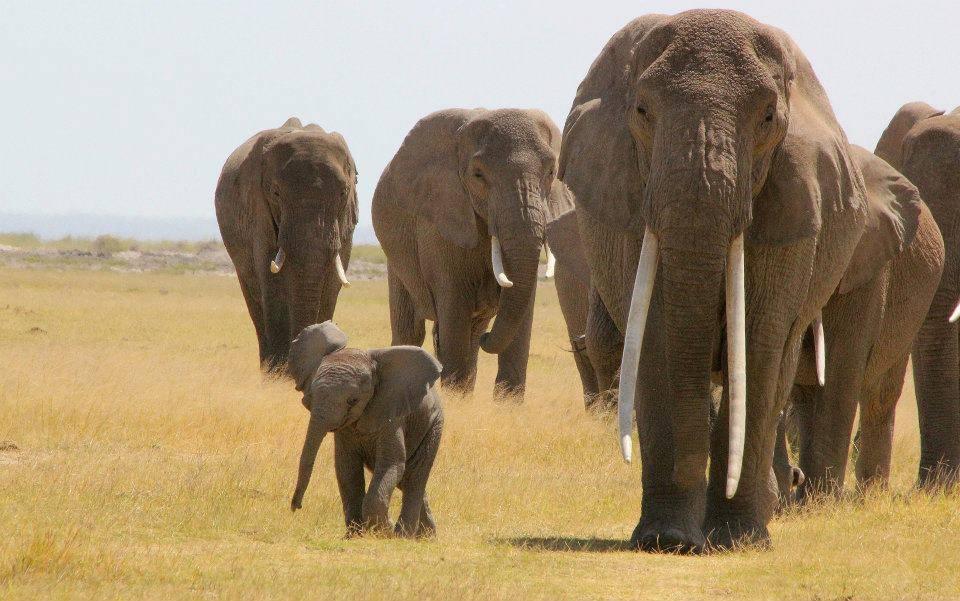 Day 2: Amboseli National Reserve