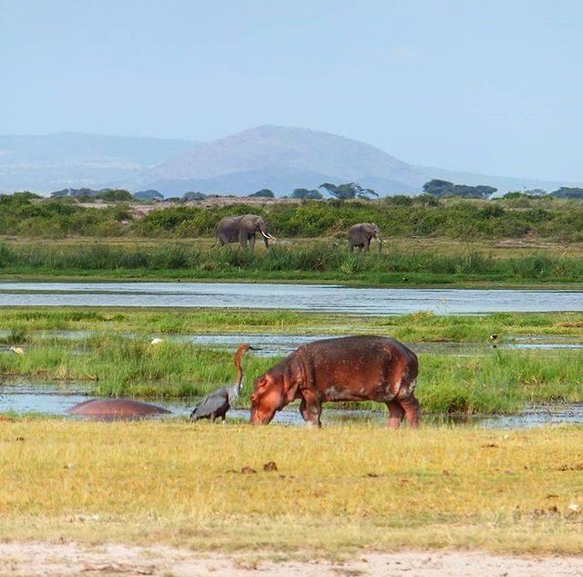 Day 3: Amboseli - Lake Naivasha
