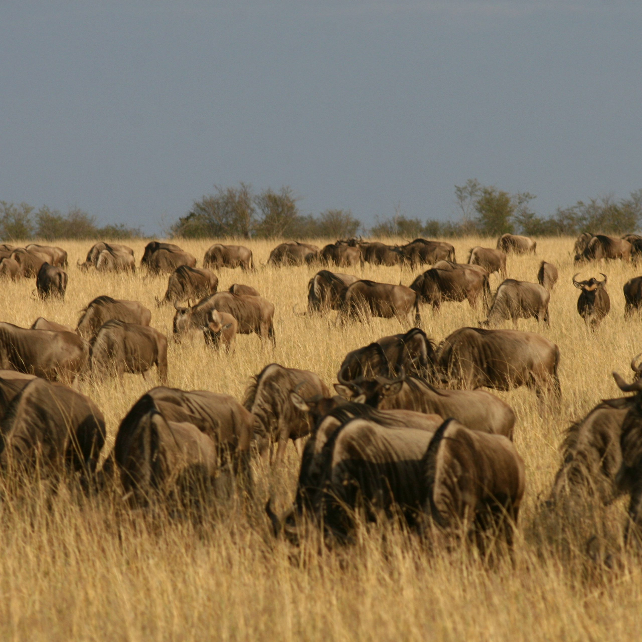 Day 4: Naivasha to Maasai Mara