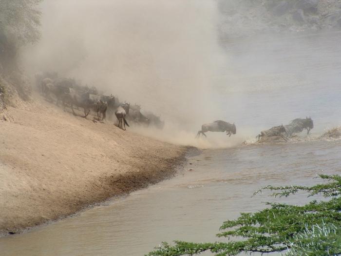 Day 5: Maasai Mara