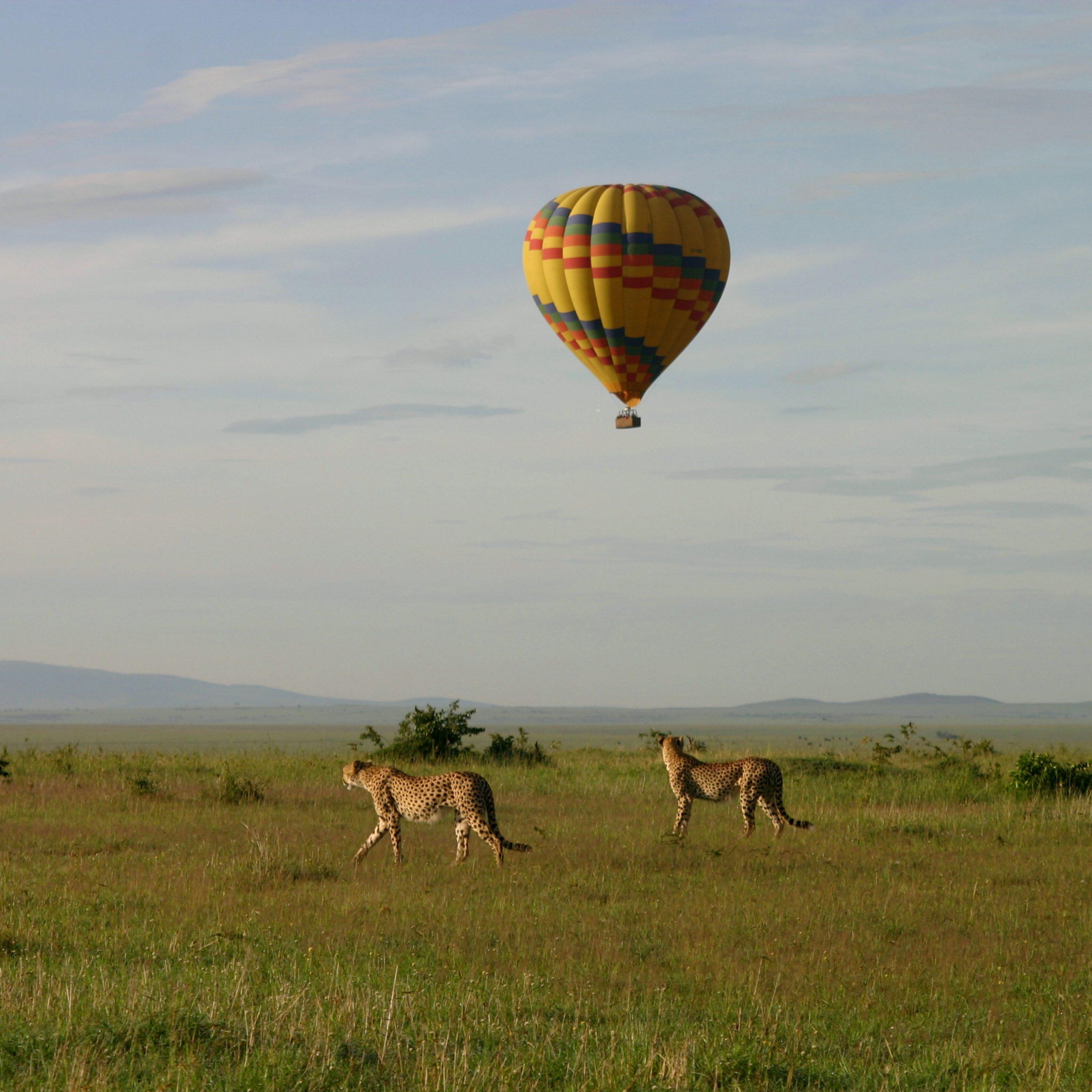 Day 6: Maasai Mara - Nairobi
