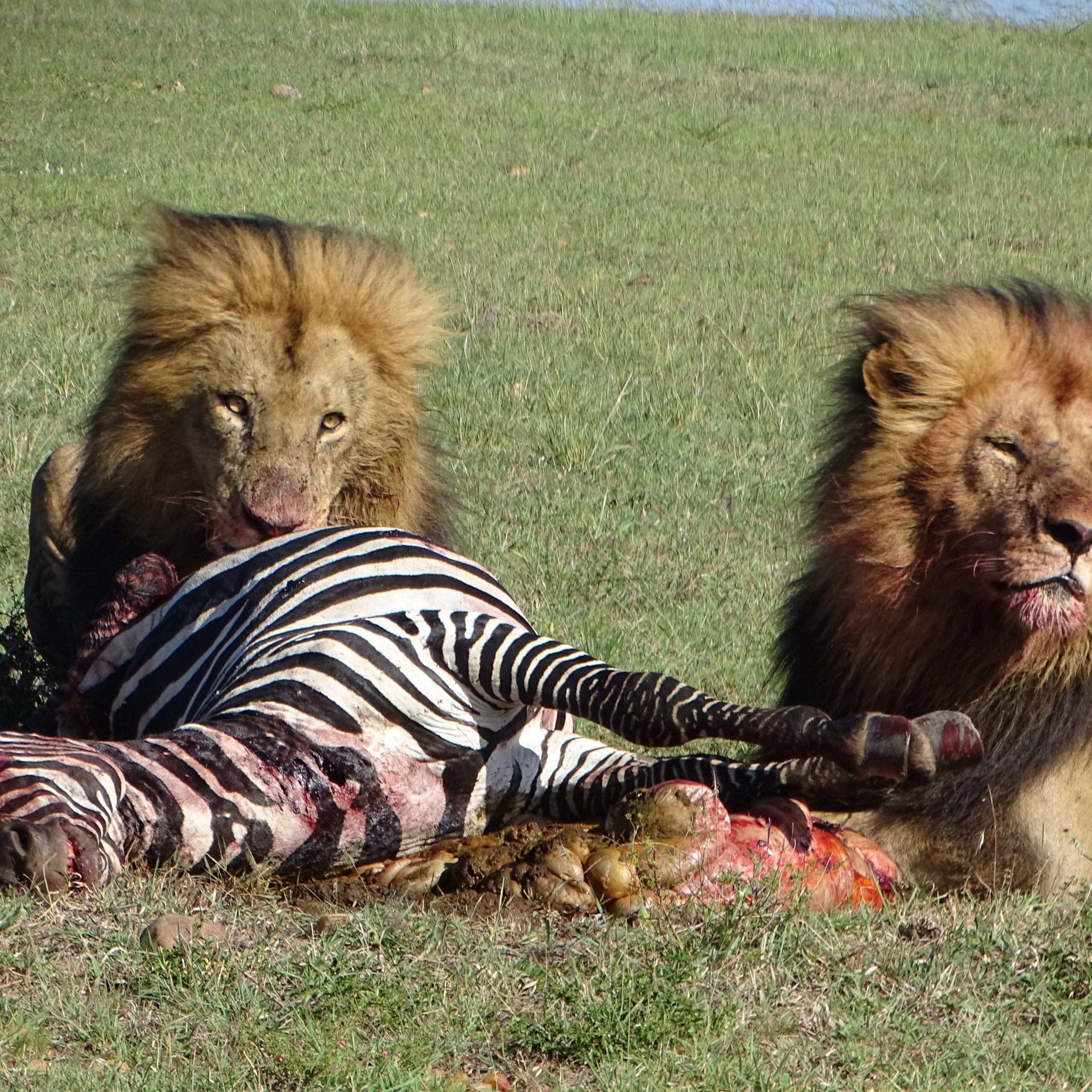 Day 4-5: Maasai Mara