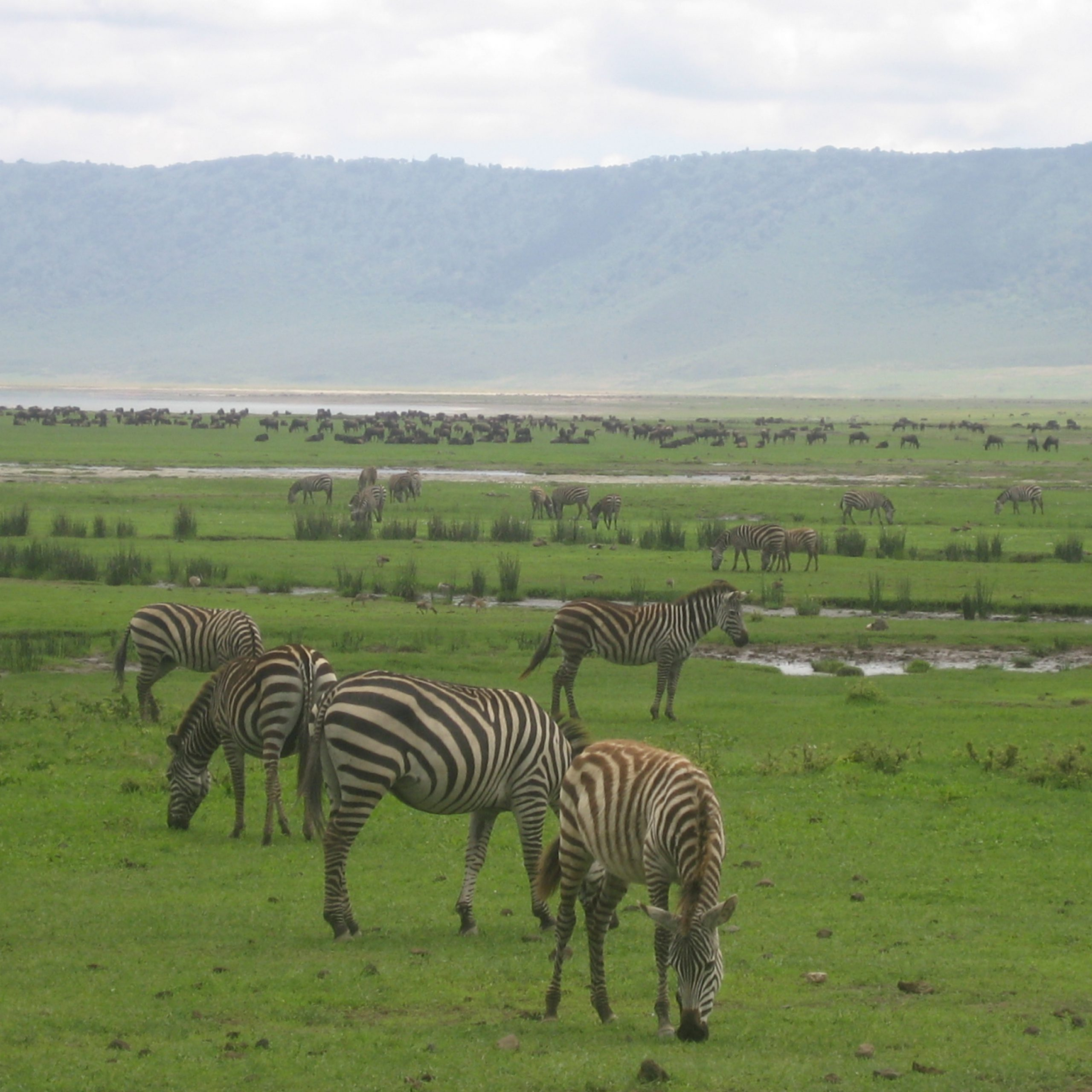 Day 5: Serengeti National Park to Ngorongoro Crater