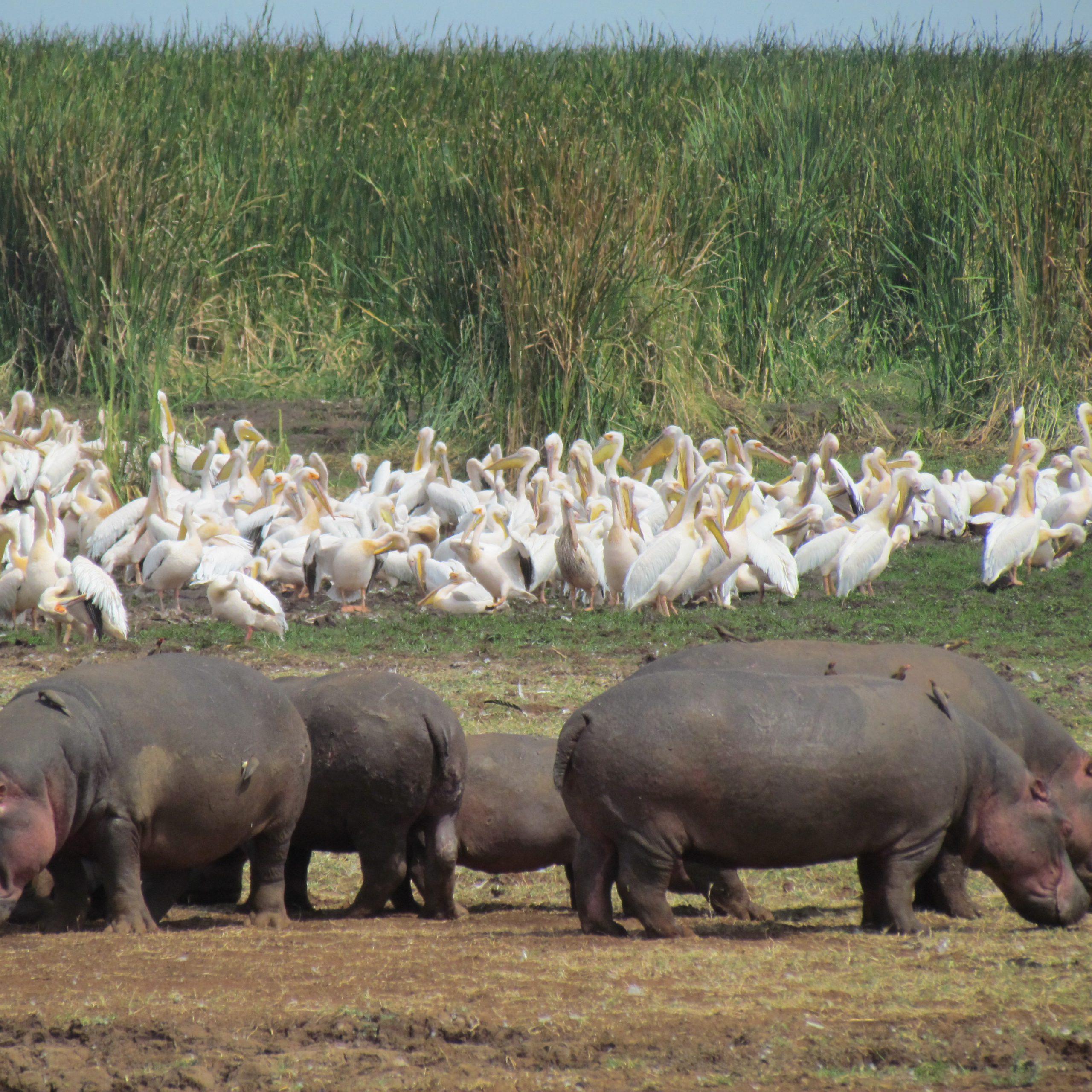 Day 6: Ngorongoro Crater to Lake Manyara National Park