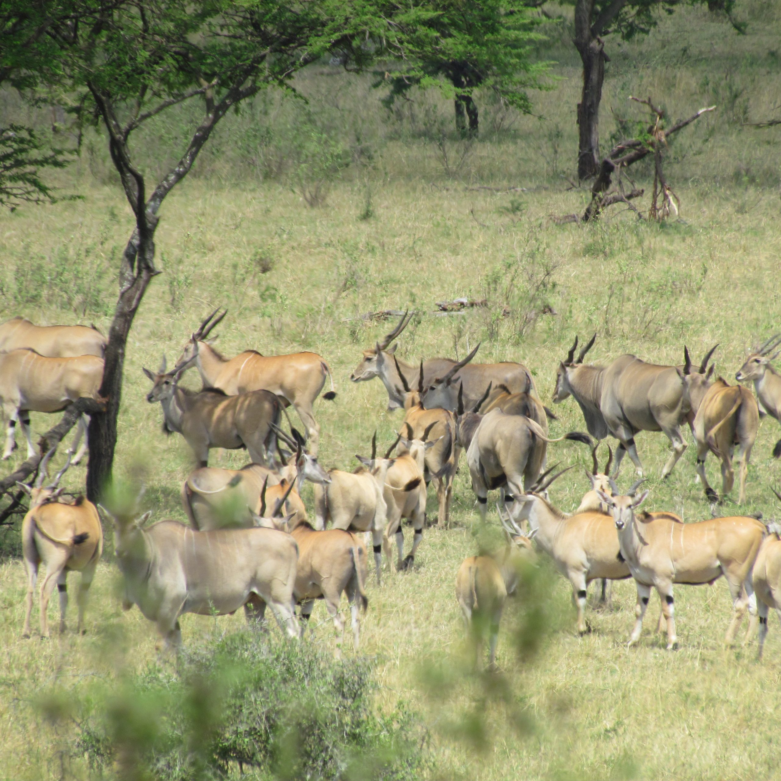 Day 3: Tarangire National Park to Serengeti National Park