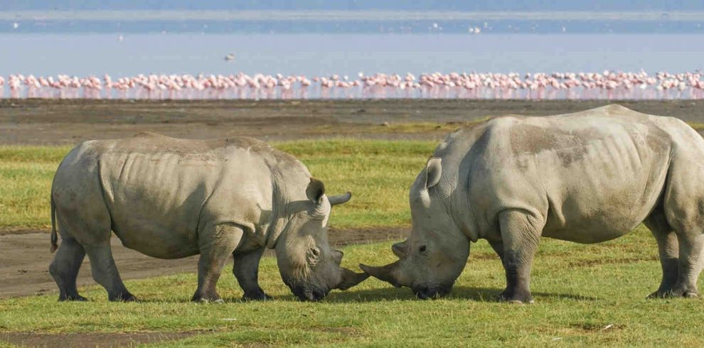 Day 1 :Nairobi City to Lake Nakuru National Park