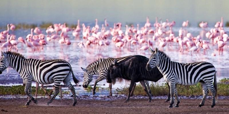 Day 2:  Lake Nakuru National Park to Masai Mara National Reserve