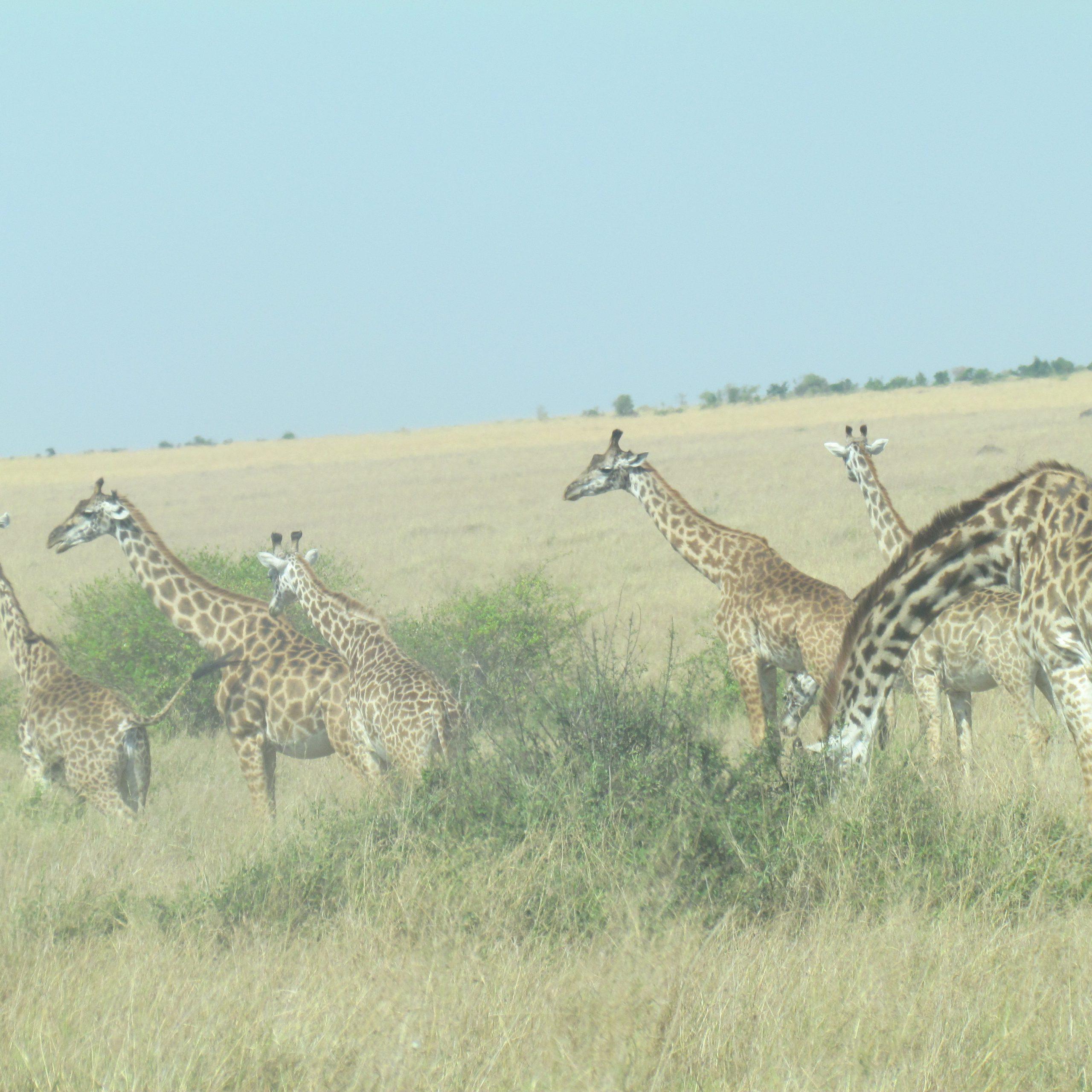 Day 5: Masai Mara NR to Isbania-Sirari Border Entry Point to Tanzania then to Serengeti National Park