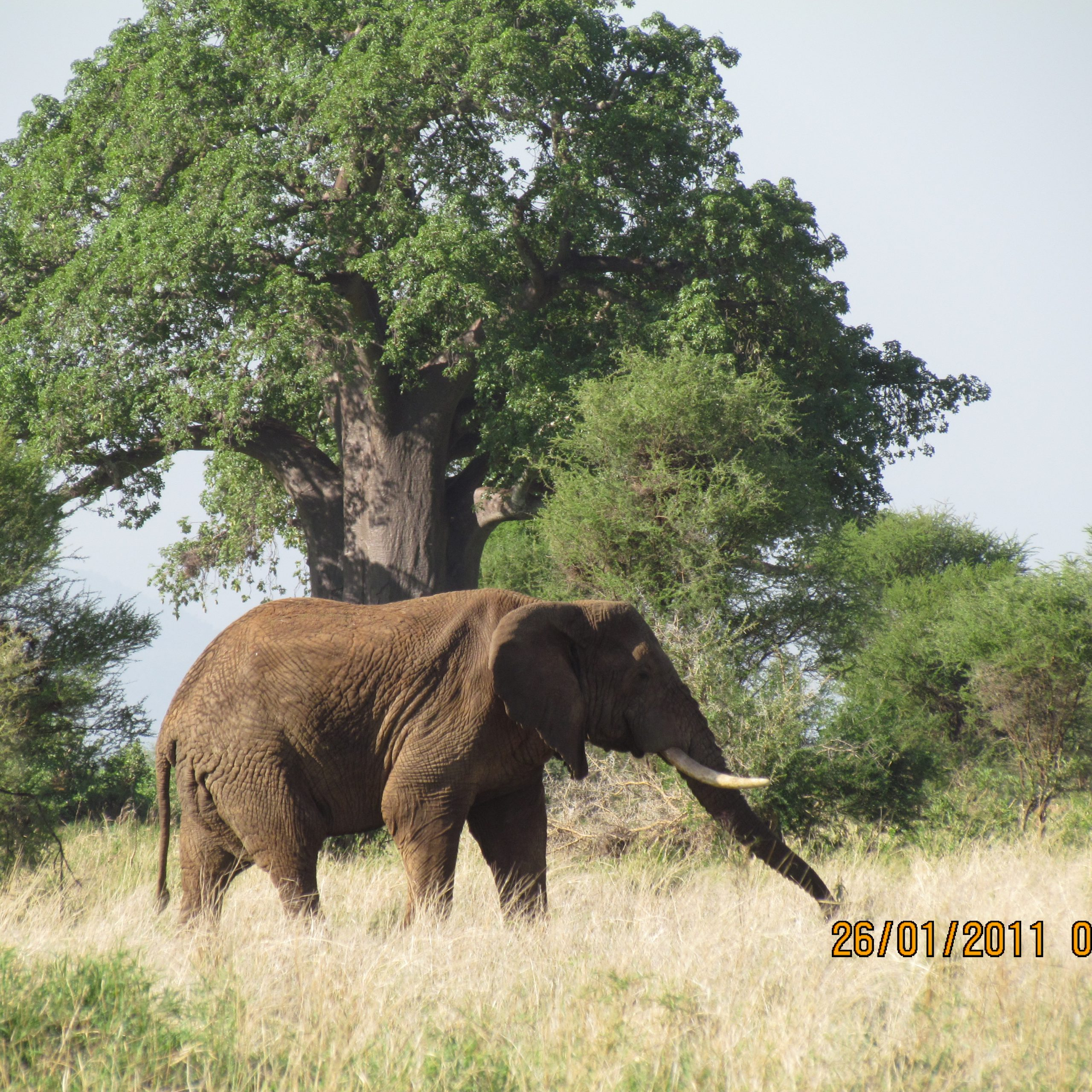 Day 10: Ngorongoro Conservation Area to Tarangire Nationl Park then to Arusha