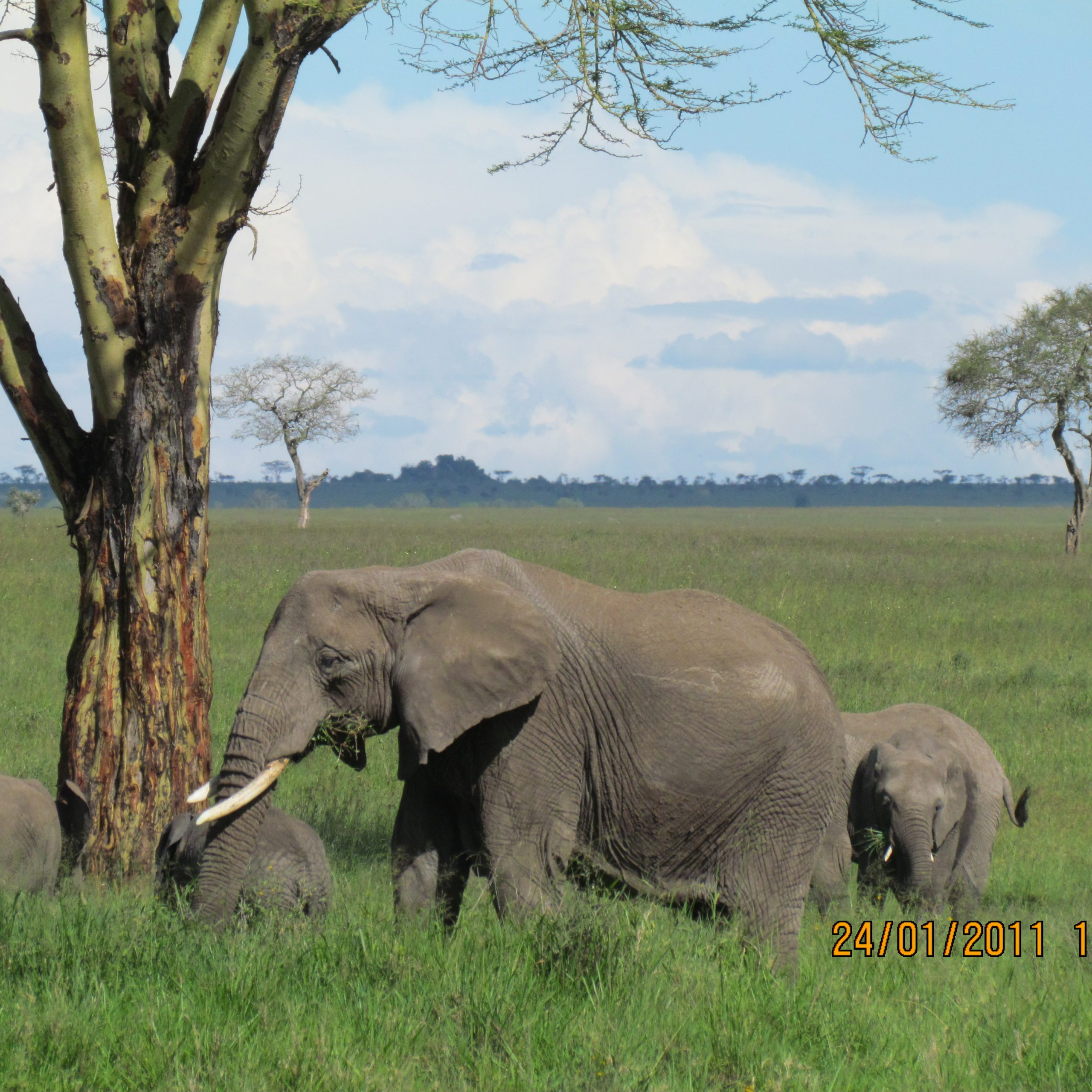 Day 7: Serengeti National Park-Ngorongoro Crater