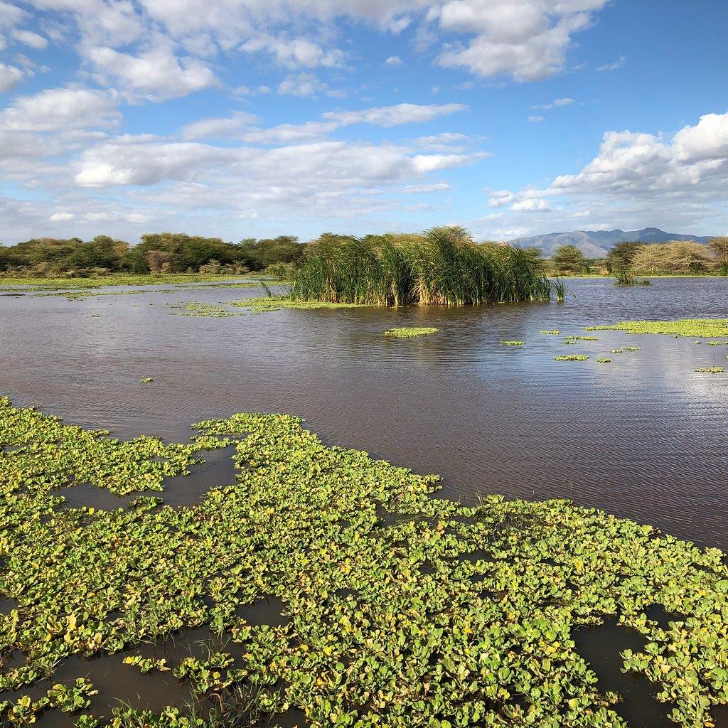 Day 1 - Lake Manyara National Park