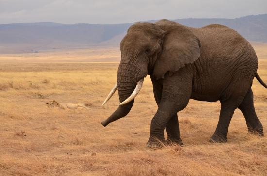 Day 2 - Ngorongoro conservation area