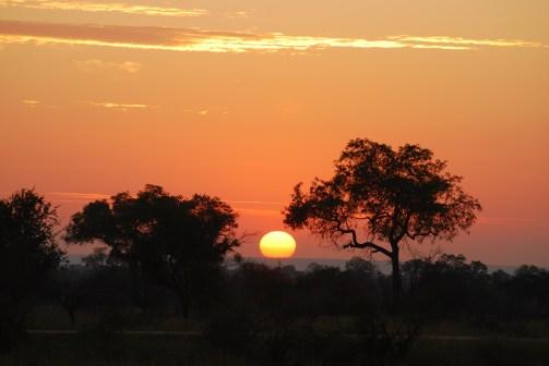 Day 5 – 7: Kruger National Park, Pretoriuskop Camp