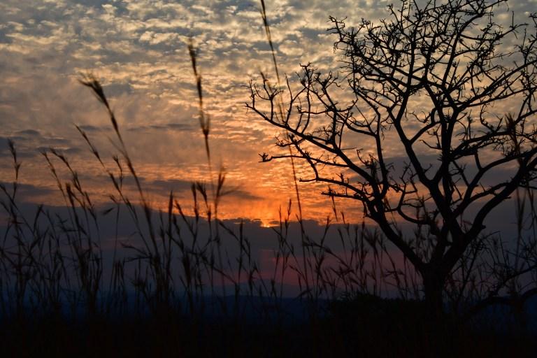 Day 9 & 10: The Kruger National Park, Pretoriuskop Camp
