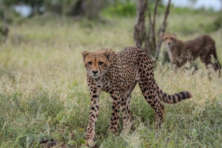 Day 7 & 8: The Kruger National Park, Satara Camp