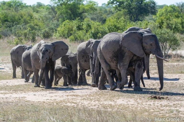 Day 5 & 6: The Kruger National Park, Letaba Camp