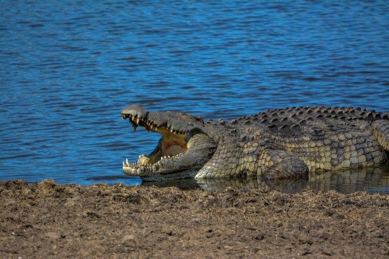 Day 3 & 4: The Kruger National Park, Olifants Camp