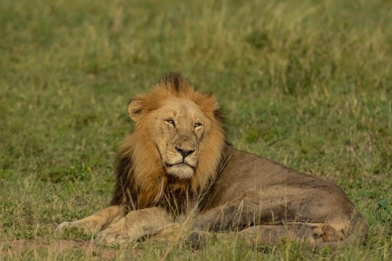 Day 1 & 2: The Kruger National Park, Skukuza Camp