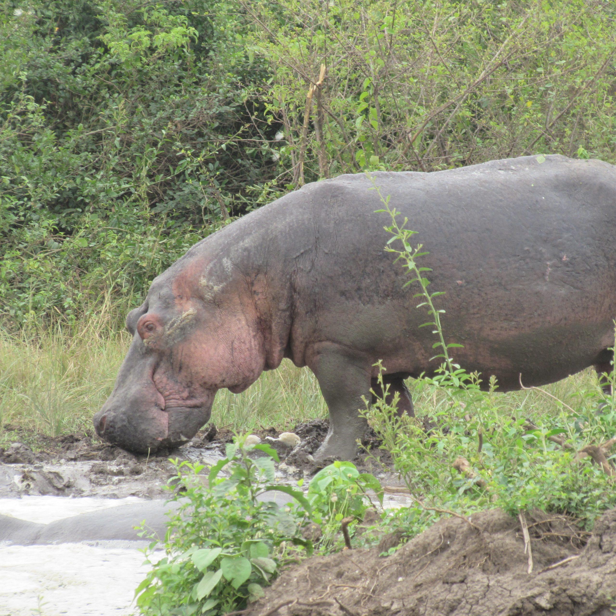 Departure for Murchison Falls National Park