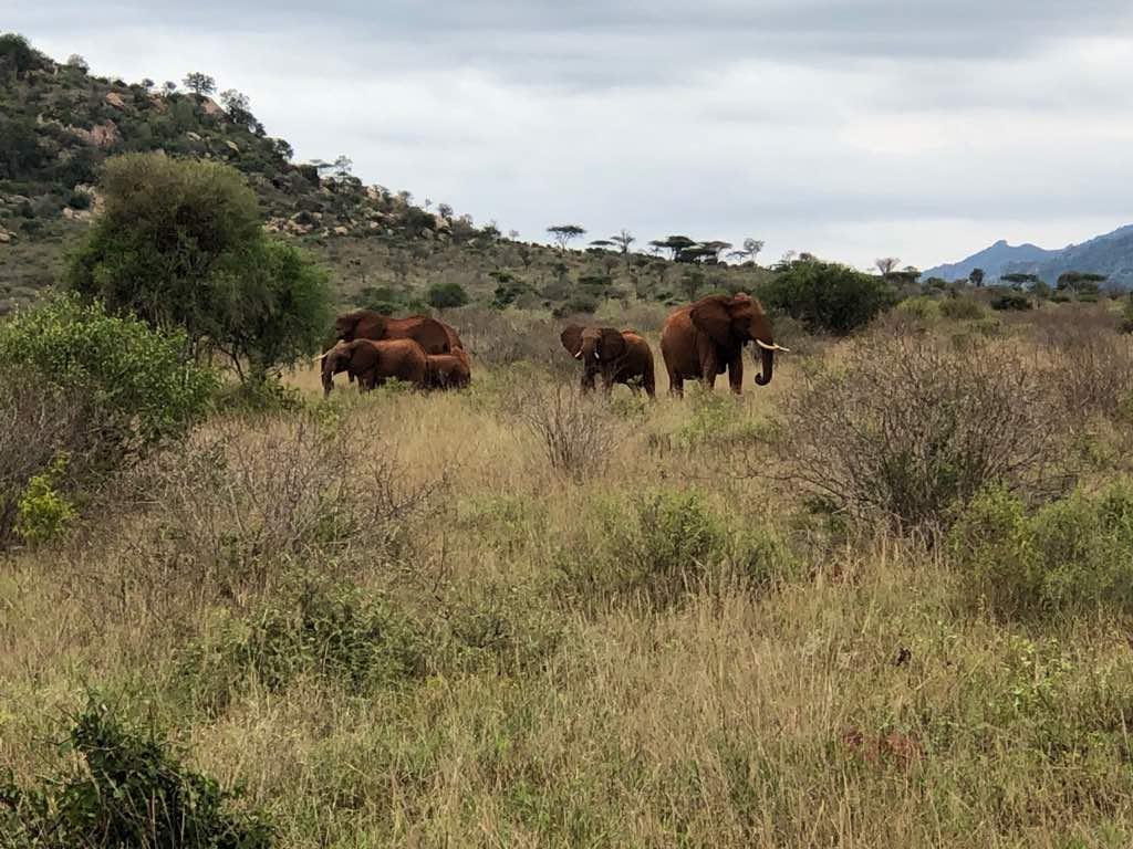 Day 7 Amboseli – Nairobi