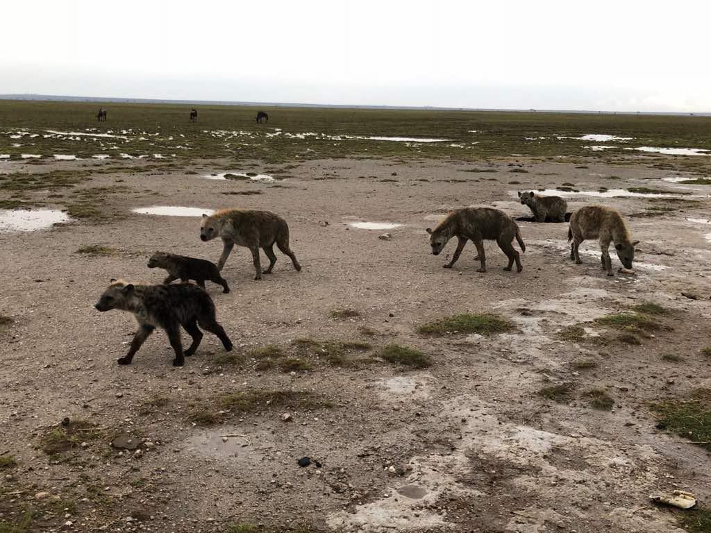 Day 6 Full Day Amboseli