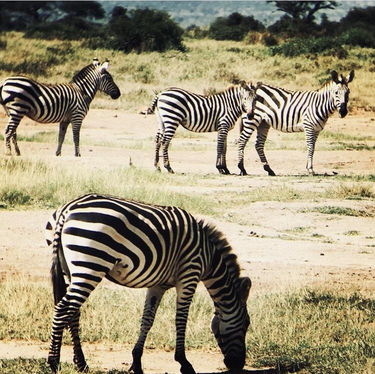 Day 1: Transfer to Lake Mburo National Park