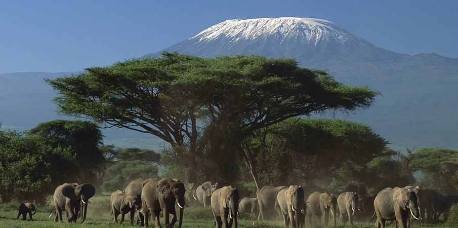 Full Day in Amboseli National Park (Enjoy the view of Mount Kilimanjaro)