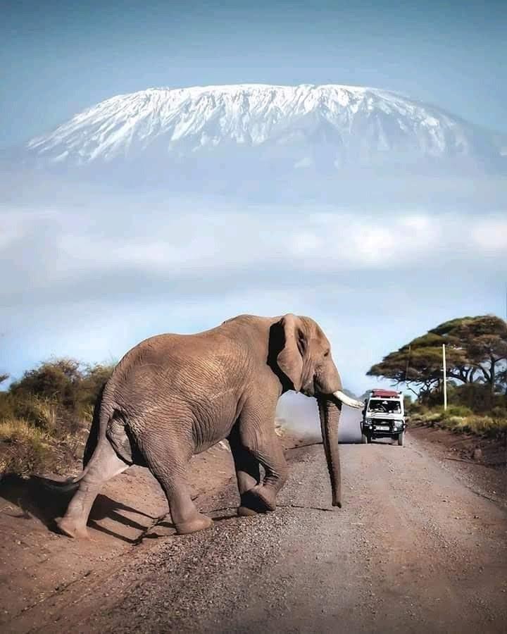 Day 01: Nairobi - Drive to Amboseli National Park