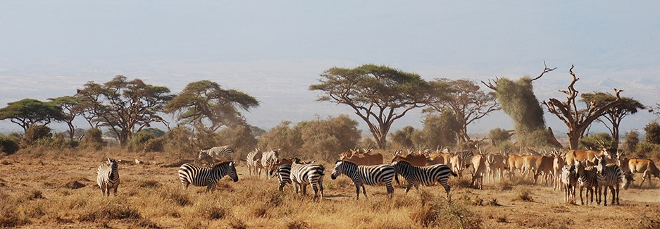 Day 02: Full Day in Amboseli National Park