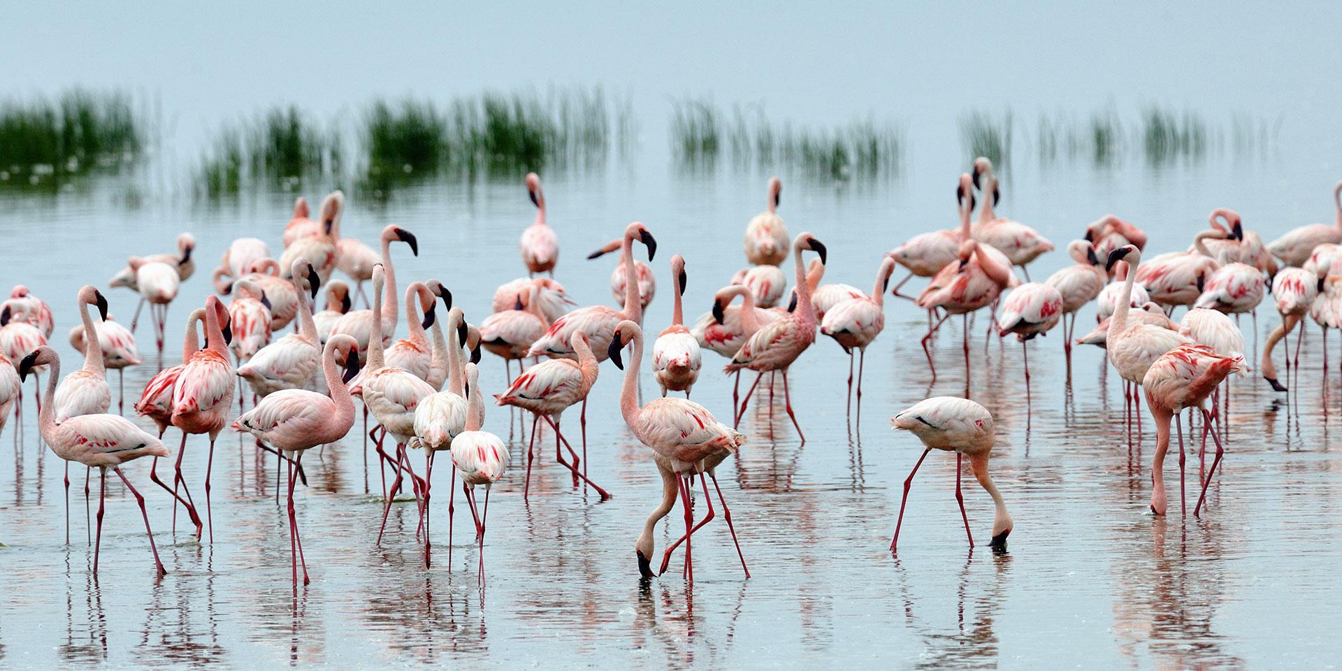 Amboseli - Drive to Lake Nakuru National Park