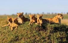 Lake Nakuru  - Drive to the Masai Mara Game Reserve (The Great Wildlife Haven)