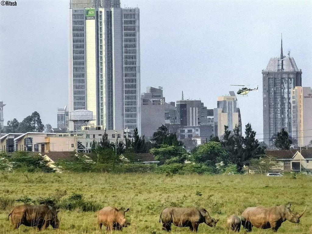 Day 03: Amboseli – Nairobi - depart