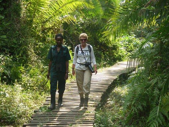 Day 2: Chimp tracking and Bigodi nature walk