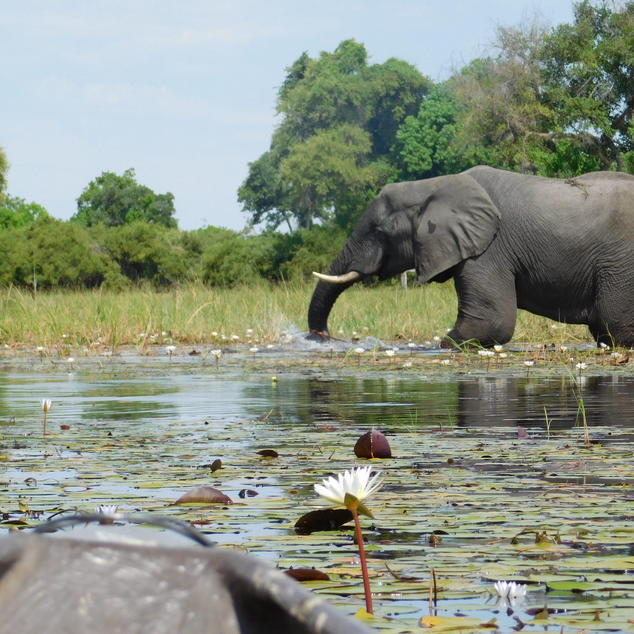 Okavango Delta-Maun