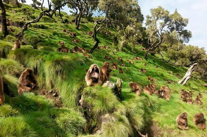 Day 6: Explore the Simien Mountains National Park
