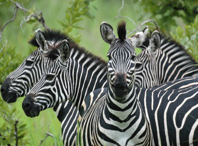 Find and Book Tours, Activities & Things to do in Africa
