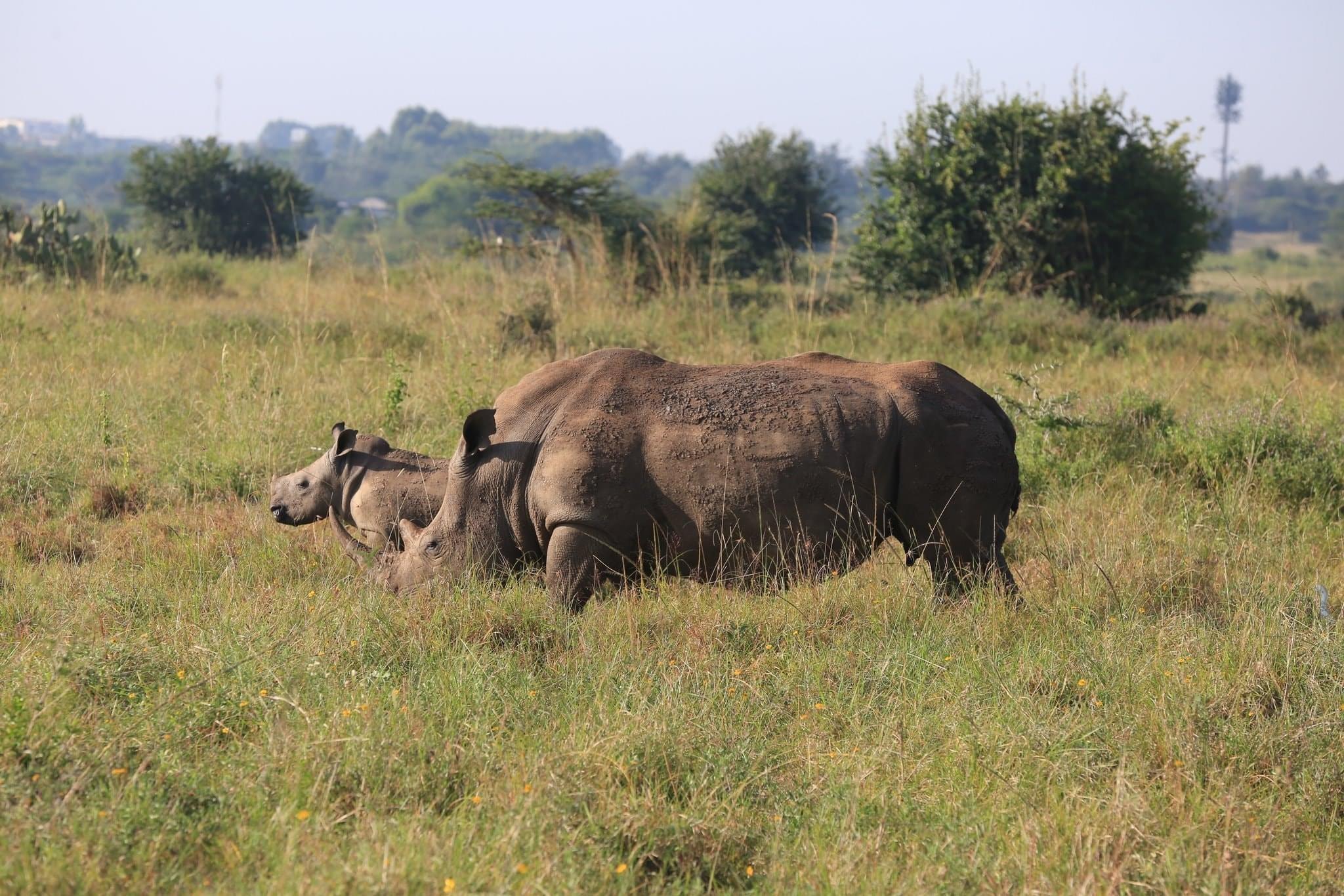 Day 4 Lake Naivasha – Lake Bogoria – Lake Nakuru National Park